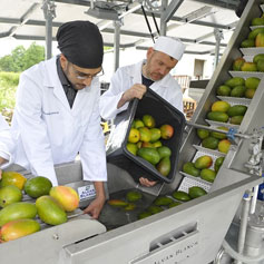 Establishment of Fruit Processing Unit